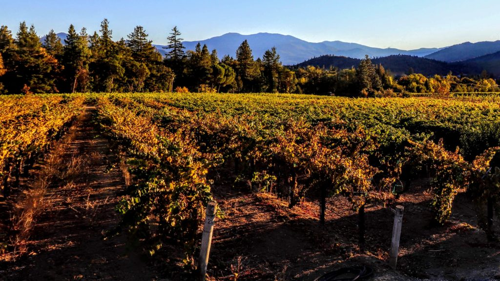 A photo of Rosella Vineyard in the fall with mixed conifer forest in the background, layers of hillsides in the distance and blue sky.